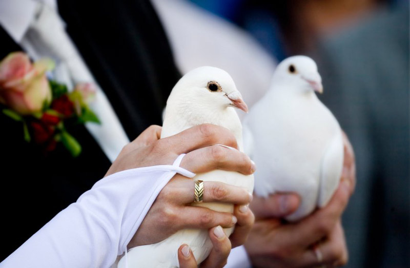 голуби на свадьбу картинки